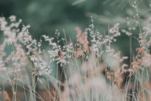 Conseillère agrée en Fleurs de Bach